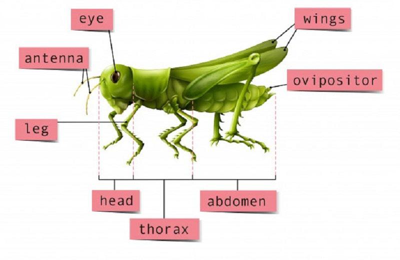 cấu tạo côn trùng