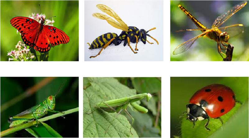 Khám phá thế giới côn trùng